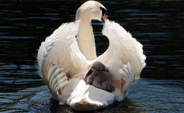 Jong en onverwacht een baby? Ik ben er voor jou!