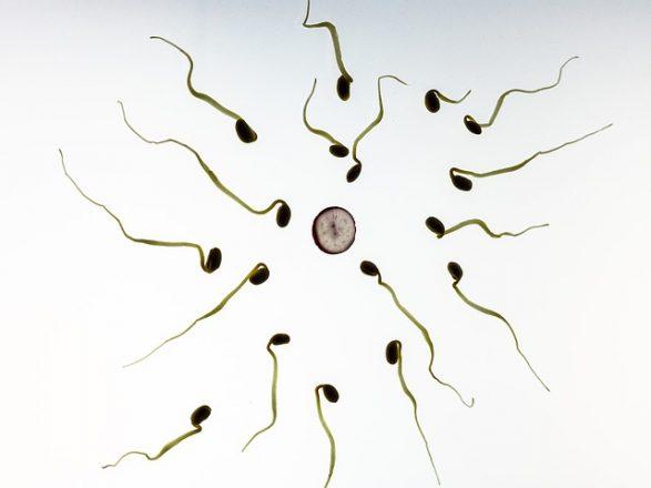 Mag het sperma van je donor na zijn dood gebruikt worden?